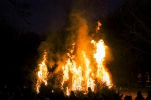 verbrennenWeihnachtsbäume (234)