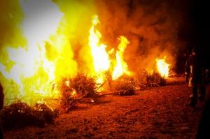 verbrennenWeihnachtsbäume (346)